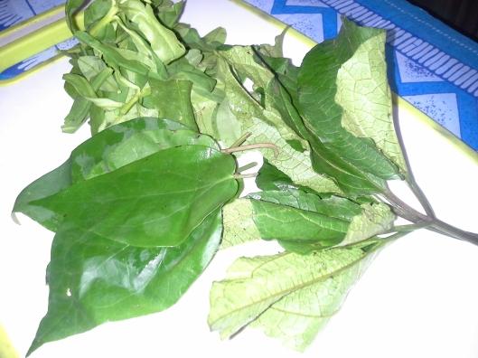 Ugu leaf, waterleaf and uziza leaf