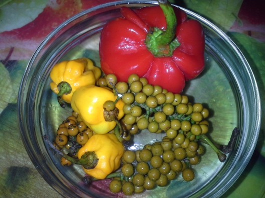 Fresh uziza seeds,  fresh Cameroon pepper,  atarodo