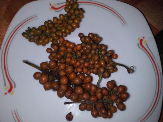 Fresh uziza seeds