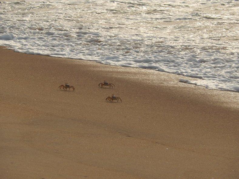 Crabs! Enjoying the water too