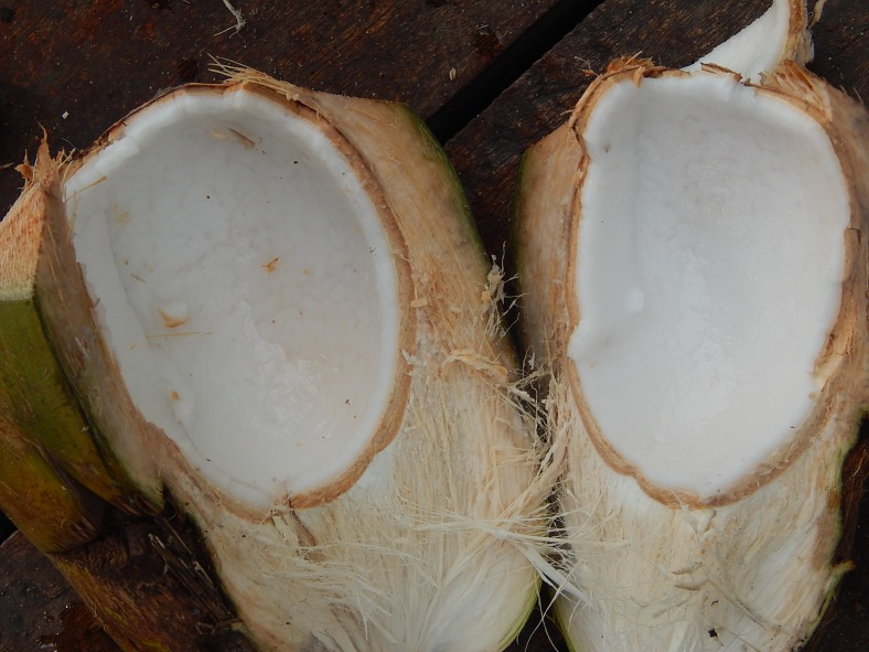 Ate some tender beach coconuts